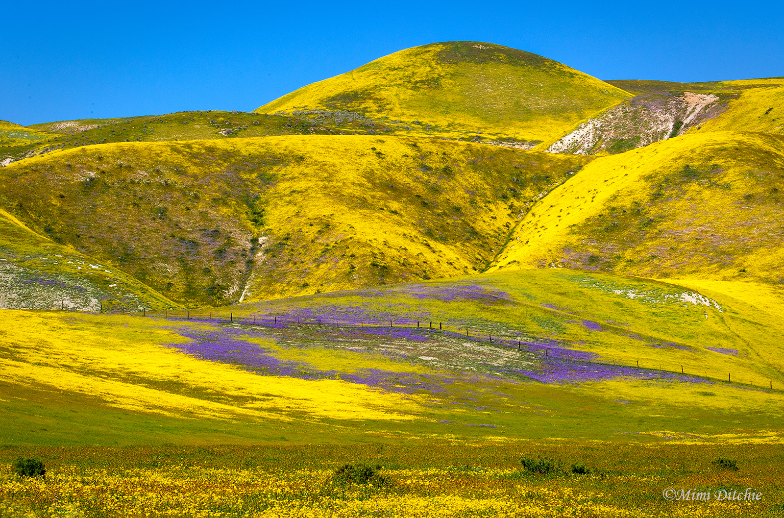 California Super Bloom is worth a visit
