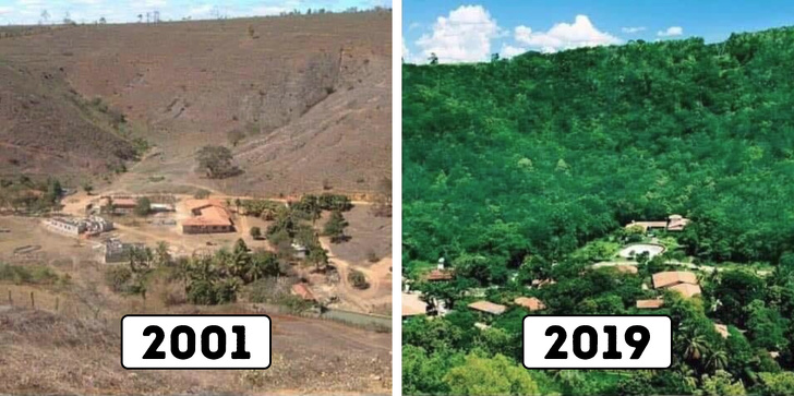 A Brazilian Couple dedication of 20 years into Rejuvenating a Barren Forest
