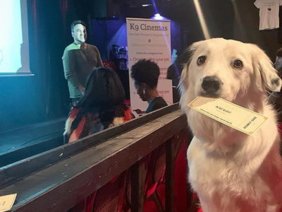 K9 Cinemas In Texas Allows You To Bring Your Dog and even Includes Wine