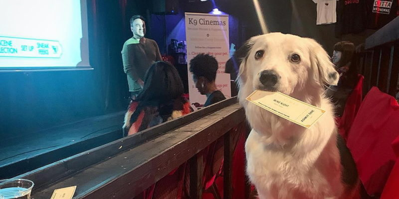 This Movie Theater Lets You Bring Your Dog - and Offers Bottomless Wine!