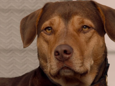Who let the dogs out?! Kansas City votes to raise the 29-year-old ban from pit bulls.