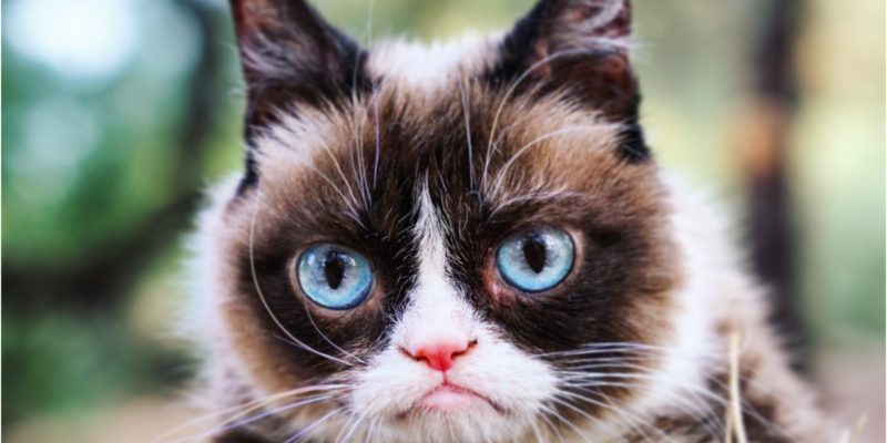 Grumpy Cat is dead, but will live on through Artificial Intelligence