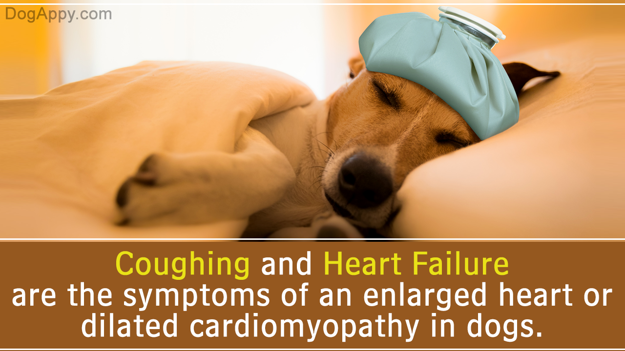 Beware your dog's food might be the cause of a fatal heart disease – FDA