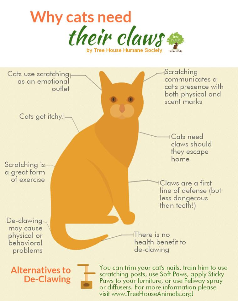 The New York State Passed Law to Ban Cat Declawing: Know Details