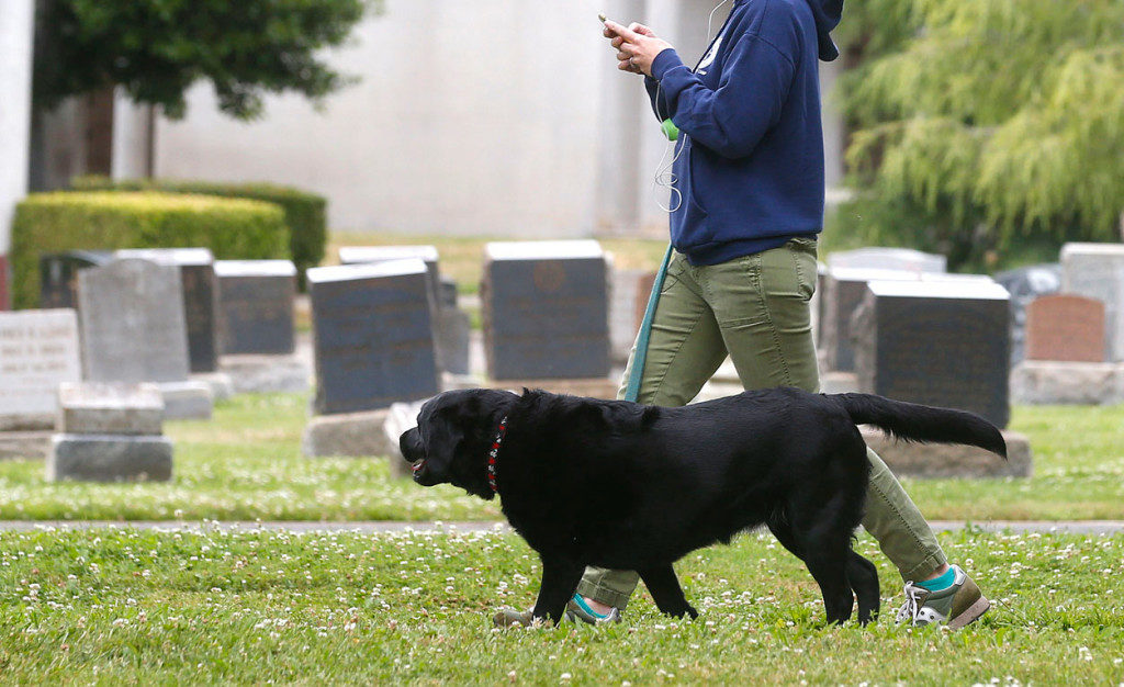 Canine Flu out breaks at East Bay making dogs more sick