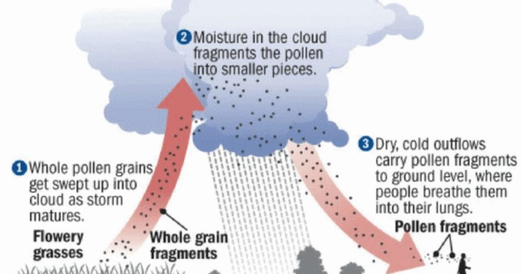 Thunder Fever trigger in British region making pollen allergies and high temperature