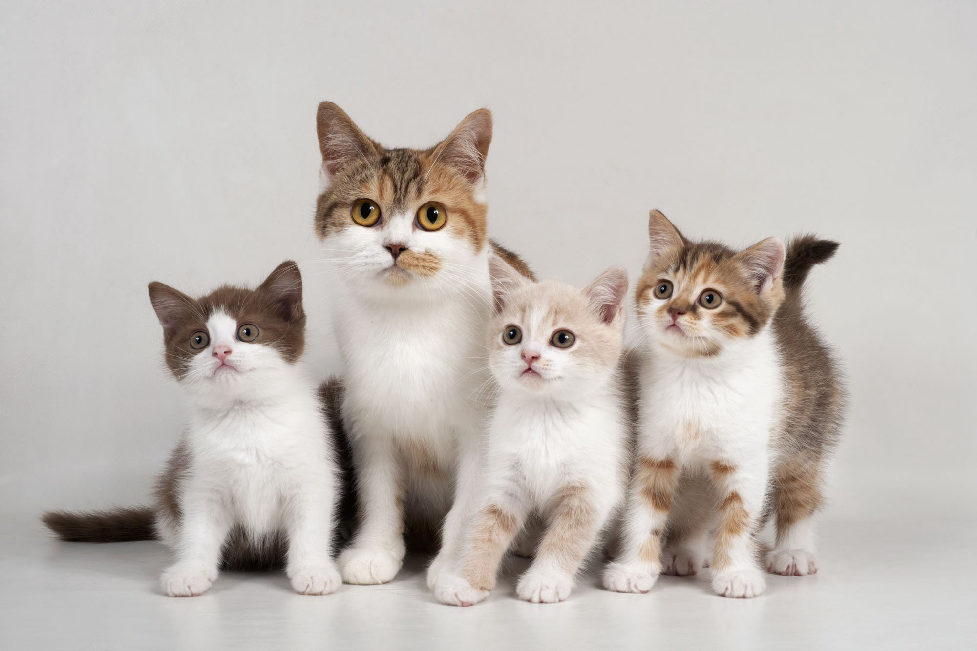 International Cat Day is here to reveal the hidden benefits of owing a feline pet!