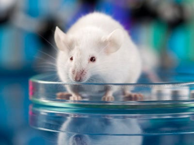 Cure for Cancer in Mice