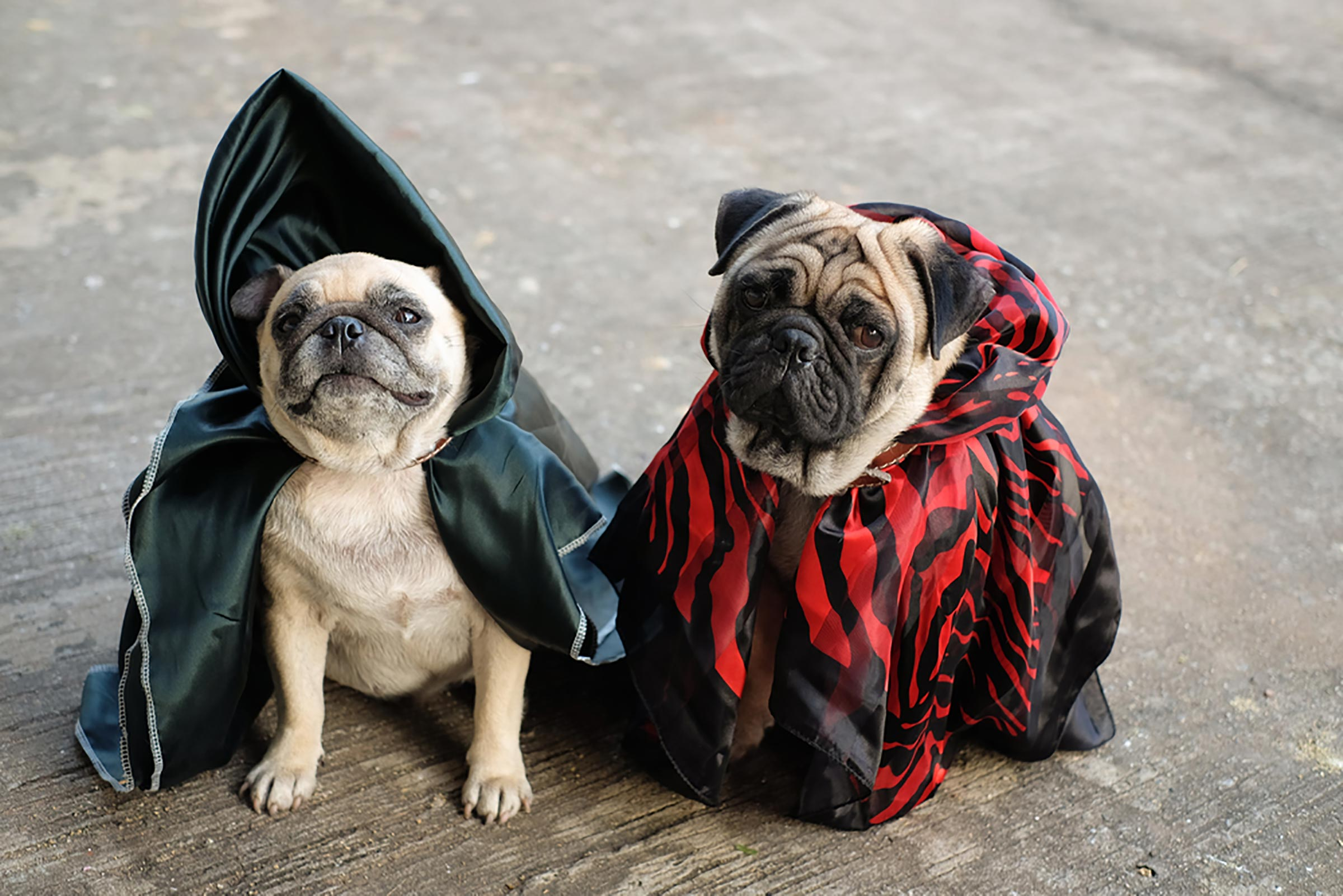 Halloween Costumes Pets Ideas