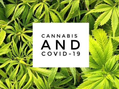 coronavirus and cannabis